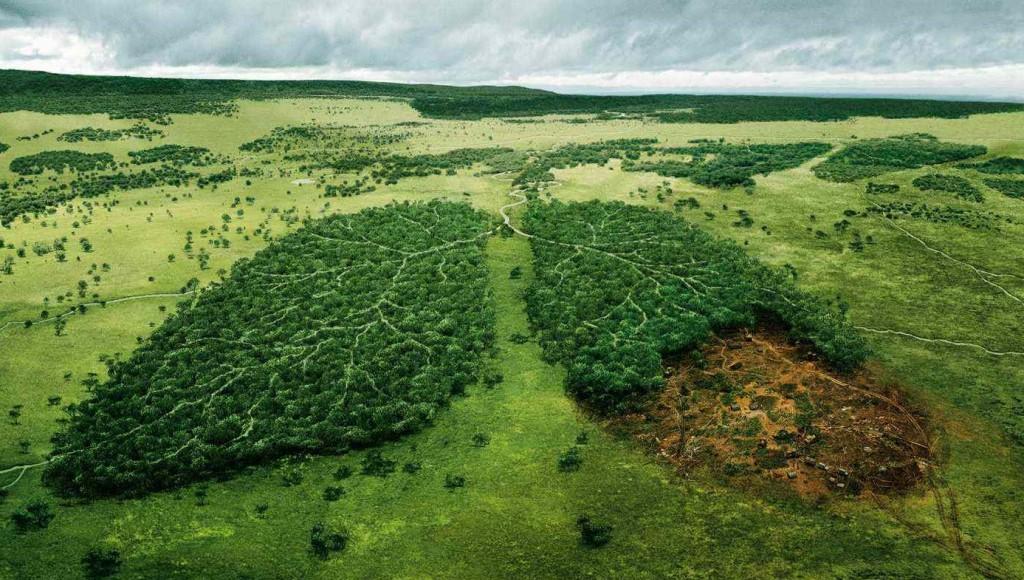 Erdők irtása helyett napelemekkel az élhető környezetünkért!